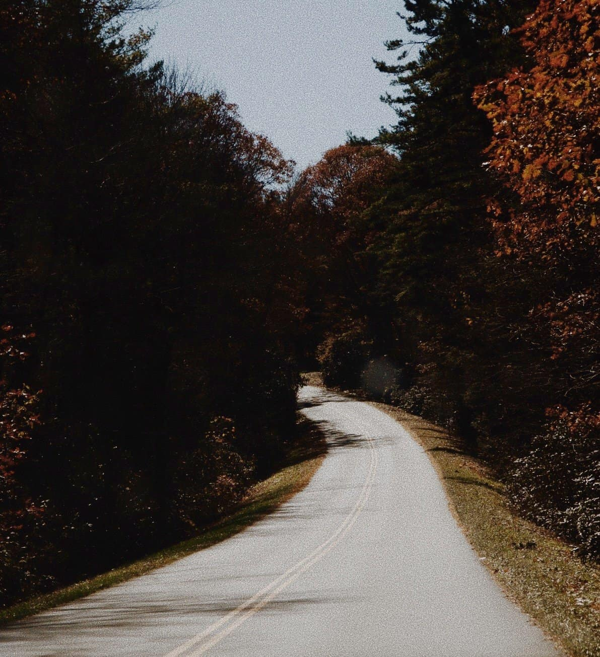 a picture of a road with trees