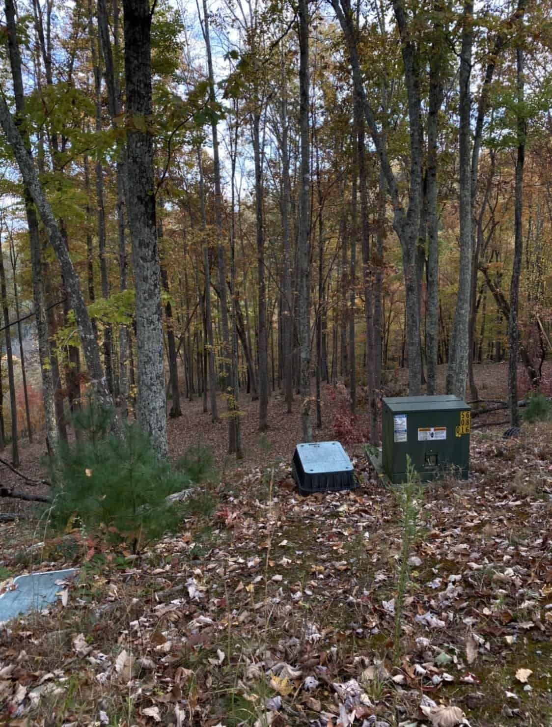wooded area with leaves on the ground