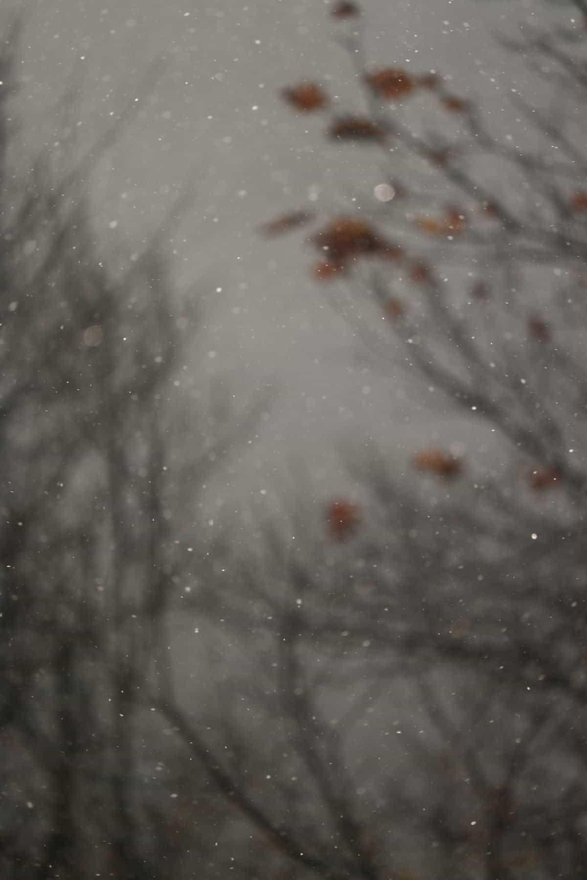 snow falling between trees