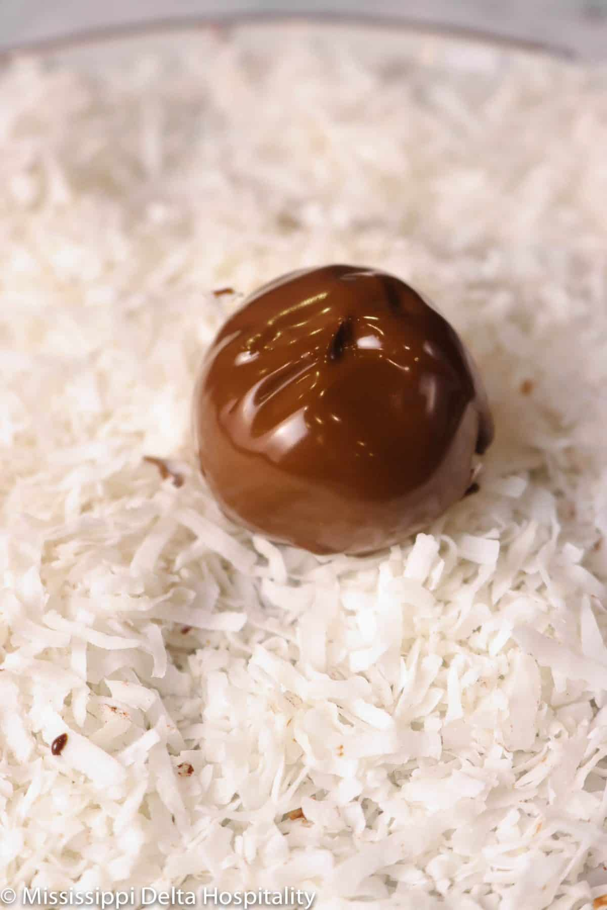chocolate truffle on a plate of coconut flakes