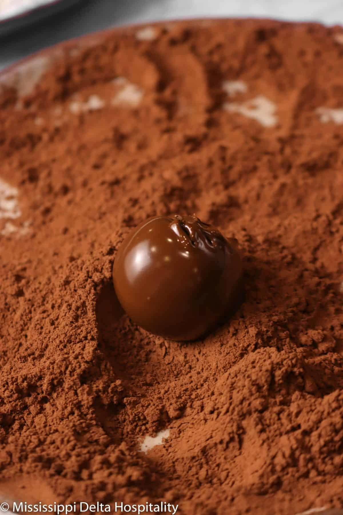 chocolate truffle on a plate of cocoa powder