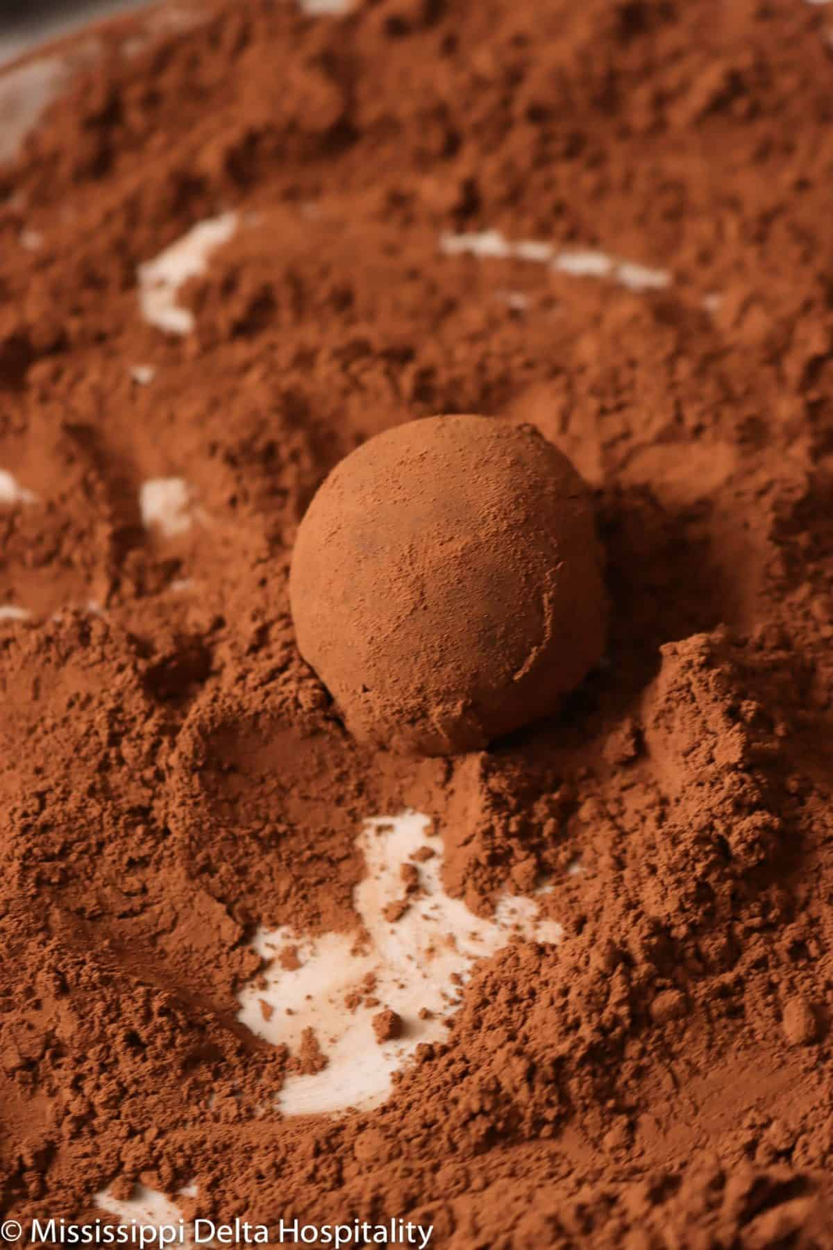chocolate truffle covered in cocoa powder