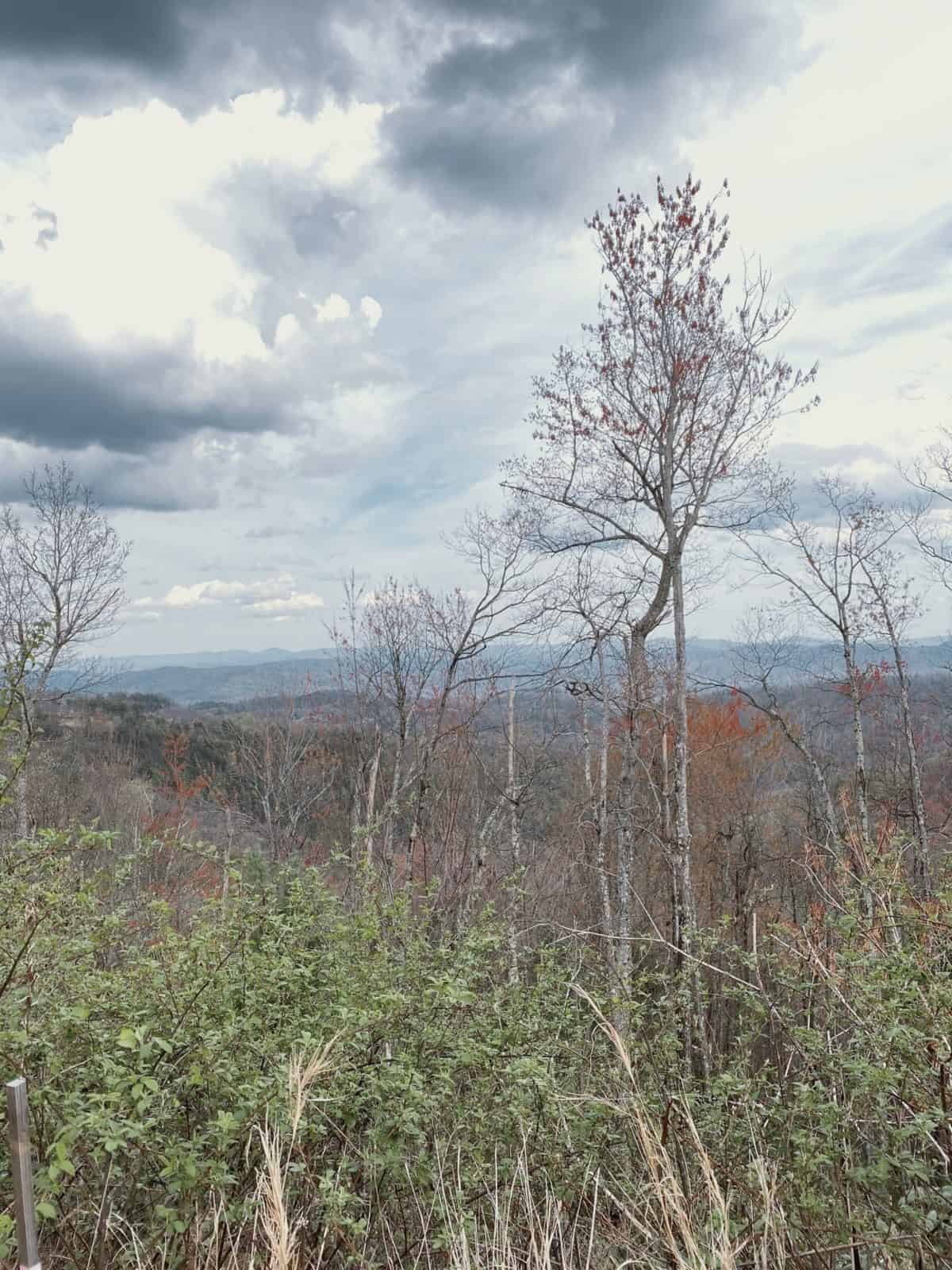 a picture of trees with mountains in the background and a cloudy sky