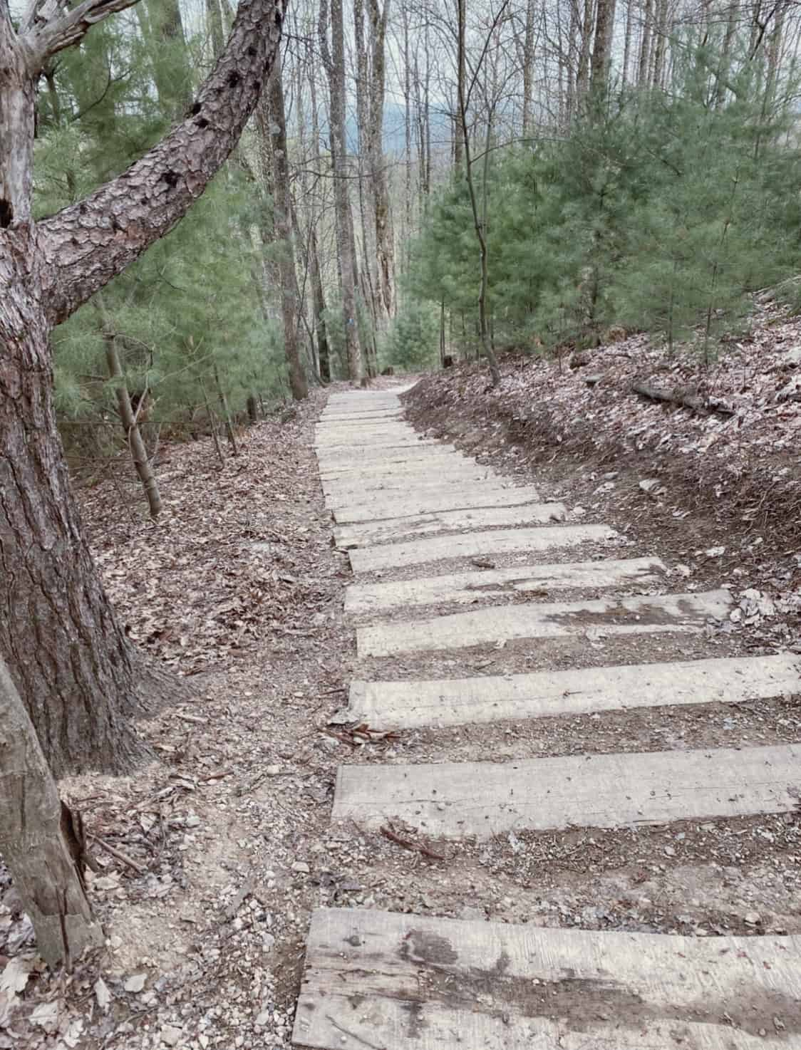 stairs leading down a hiking trail