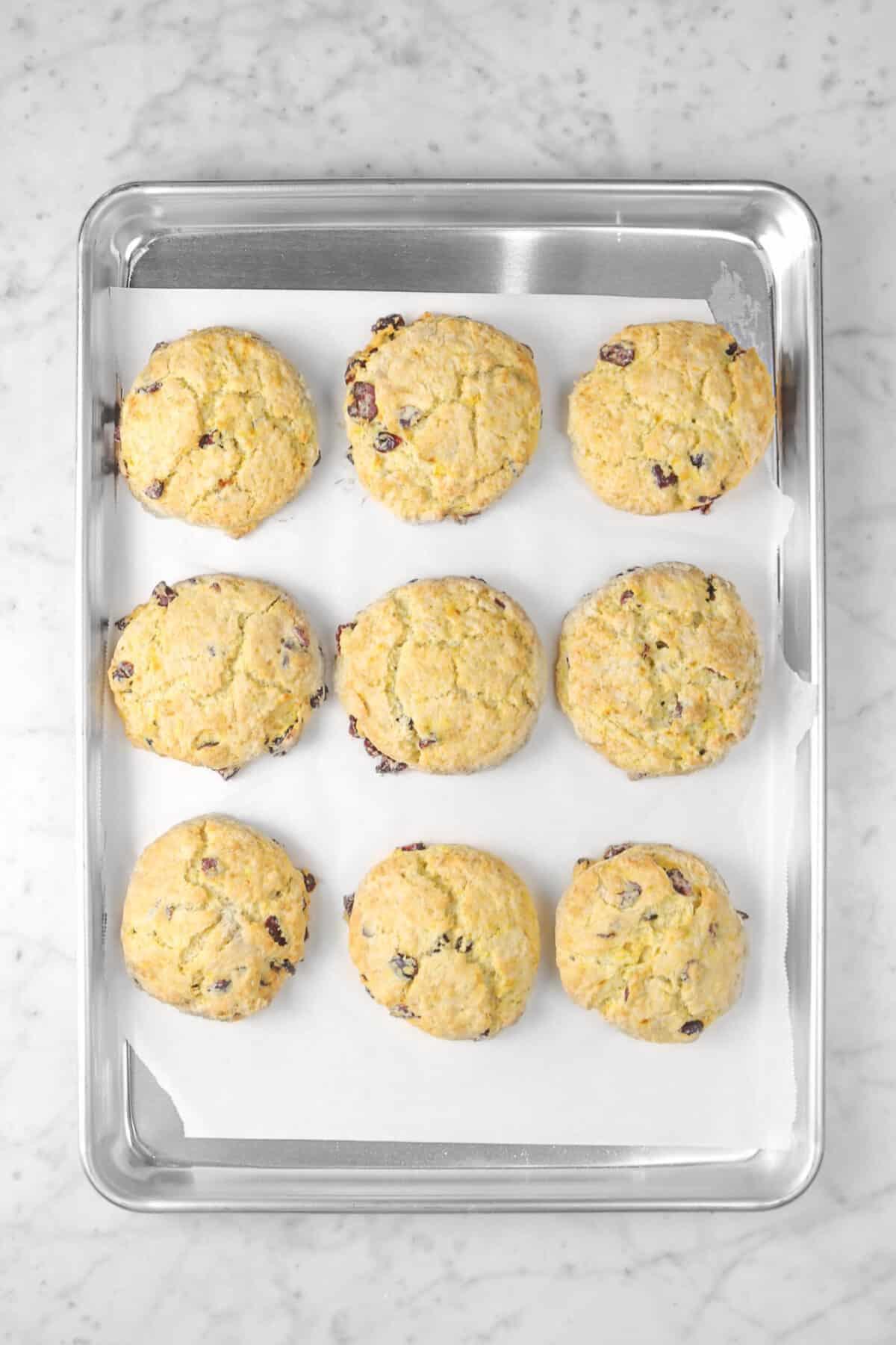 nine baked orange cranberry scones on a sheet pan